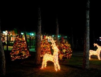alquila renos navidad