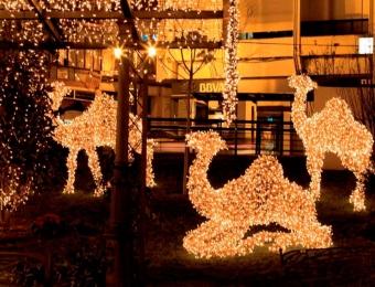 renos-de-navidad-con-luces